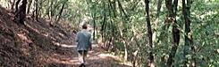 wandeling bos praag
