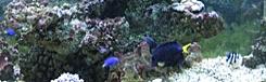 morsky svet prague