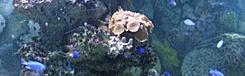 morsky svet praag