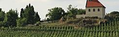 wijngaarden in praag