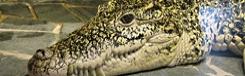 krokodillen zoo praag