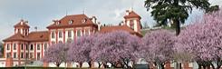 kersenbloesem Praag